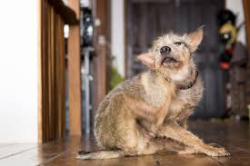 Natural remedies for dog skin allergies