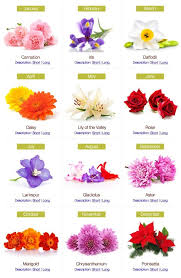 Month Flowers Chart Birthday Flowers By Month Birth Month Flowers Birth