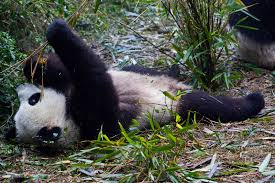 catcher in the rye short essay questions mental health term paper essay on extinction of species buscio mary giant pandas and humans a lesson in sustainability good