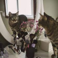 Everything You Need To Know About Why Your Cat Scratches Mirrors Straight From Vets
