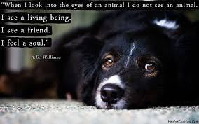When I Look Into The Eyes Of An Animal I Do Not See An Animal I See