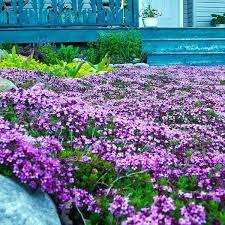 low maintenance plants for central florida alternatives to grass best low maintenance plants for central florida