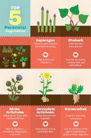 perennial plants for your garden top five perennials vegetables
