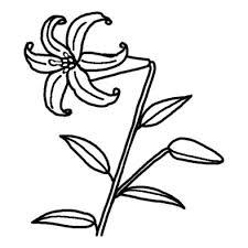 ユリ百合2夏の花無料白黒イラスト素材