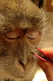 the monkey s owner teresa bullock captured the two minute clip at her house in ohio