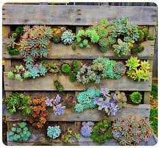 30 marvelous succulent garden ideas