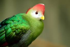 Oiseau Martine 27/08 trouvé par Ajonc et Jov Images?q=tbn:ANd9GcTH1GEdd4aO_gyMnrY9JlKbeemcIgXW0BdIDTZ6c_XPceHi3Wl8Ew