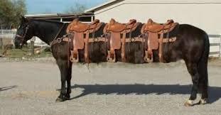 Resultado de imagem para cavalo selado