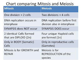 Mitosis Versus Meiosis Chart Chapter 10 Meiosis And An Introduction To Genetics Making