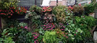 garden shade. Scented Geranium Garden Shade