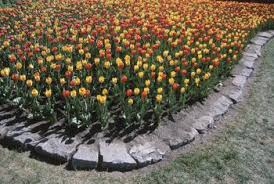 garden edgers. Beautiful Edgers Lay Brick Edgers To Create A Beautiful Garden Border With Garden Edgers R