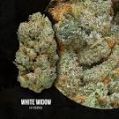 Image result for white widow