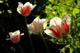 may gardening tips late spring