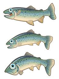 Image result for images of cartoon trout