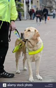 Vision Assistance Guide Dog Dogs Assistance Dog Blind Visually Impaired Vision