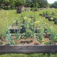 Homewood Middle School | The Edible Schoolyard Project