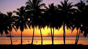 1920x1080 palm tree desktop wallpaper hd wallpapers backgrounds of your choice