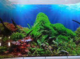 Background Wallpaper For Aquarium ...