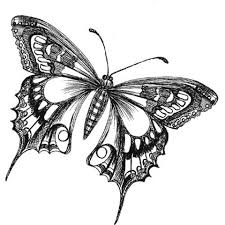 drawing butterfly pictures. Unique Drawing Butterfly Drawings Black And White  Butterfly Drawing Image Search Results With Drawing Pictures 3