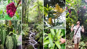 hawaii tropical botanic garden tour