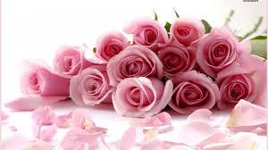 valentine roses wallpaper. Contemporary Valentine A Dozen Pink Roses On Valentine Roses Wallpaper F