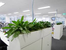 office planter boxes. Office Planter With Boxes For Hire: Sydney Buildings, Hotels \u0026  Offices Office Planter Boxes E