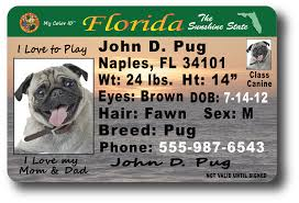 Florida Florida Drivers Drivers License