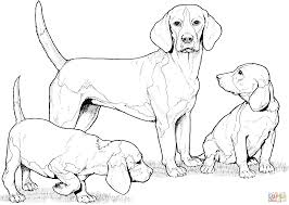 Small Picture Beagle with Puppies coloring page Free Printable Coloring Pages