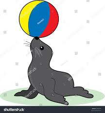 Image result for seal balancing ball
