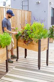 elevated garden beds. Man Pictured Caring For Flowers And Herbs In A Self-watering Elevated Planter Box On Garden Beds