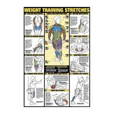 Weight Training Chart With Pictures The Weight Training Stretches Chart