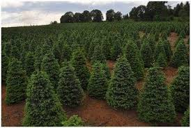 Christmas tree grower in Oregon branches out with NRCS assistance