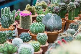 how to garden in the desert climate of arizona