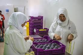 """Résultat de recherche d'images pour """"AOC figues de djebba tunisie"""""""