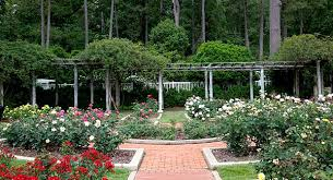 Small Picture Rose Garden Designs Rose Bushes