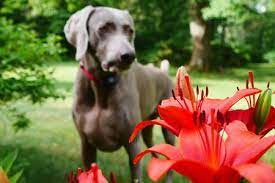how to treat plant poisoning in puppies