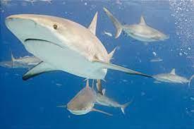Shark Week 2021: When does Shark Week ...