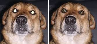 Pet Eye Fix Guide Red Eye Remover On Pets Photos