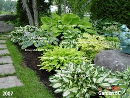 Beautiful Hosta Garden Lots Of Photos With Names The Plants On Them