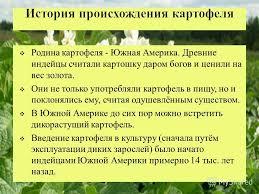 Презентация на тему Тема Технология выращивания картофеля  3 Родина картофеля
