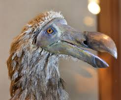 alimentacion-dodo