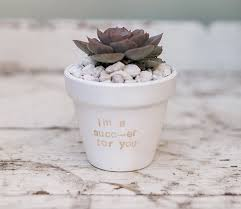 diy potted plants via laurenconrad com