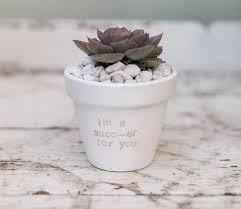 diy potted plants via laurenconrad com