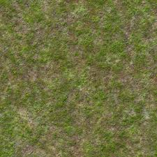 wild grass texture. Perfect Texture To Wild Grass Texture T