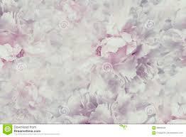 Bloemen Uitstekende Mooie Achtergrond Behang Van Bloemen Licht Roze