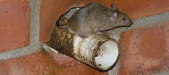 how to control rodents in your garden