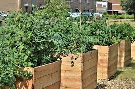 vegetable garden design green giant
