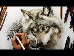 gray wolf drawing colored. Interesting Colored Colored Pencil Drawing Grey Wolf  Speed Draw  Jasmina Susak In Gray Drawing 6