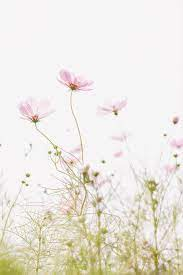 Light Pink Flower Background For Mobile ...