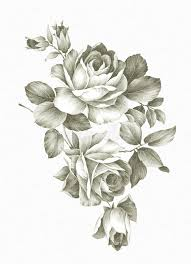 Small Picture Hand Drawn Rose Stock Photo Image 17634460